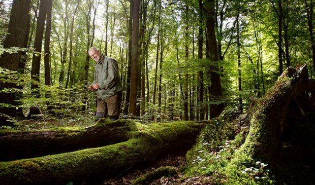 Die unbekannten Helden im Wald