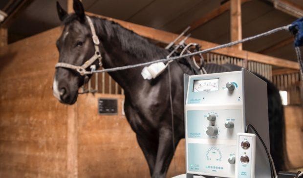 Neue alternative Therapie für Tiere