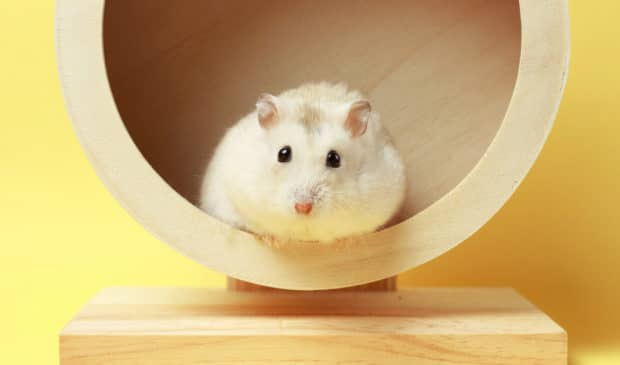Raus aus dem Hamsterrad – Gesundheit, Leichtigkeit und Lebensfreude sind wieder gefragt