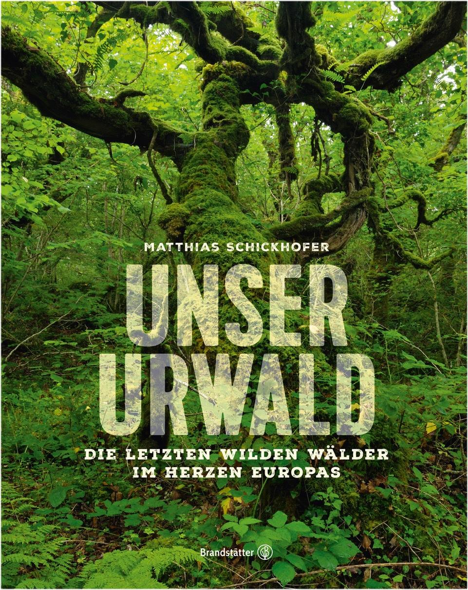 Der Urwald, das letzte Waldparadies